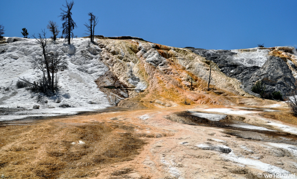 wildlife and highlights of yellowstone national park