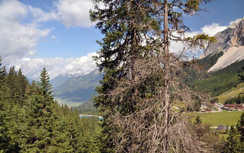 omgeving Ehrwalder Alm