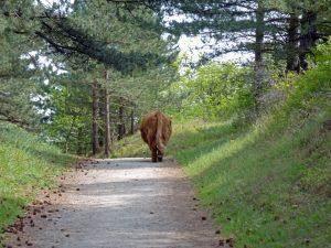 20 Dutch National Parks
