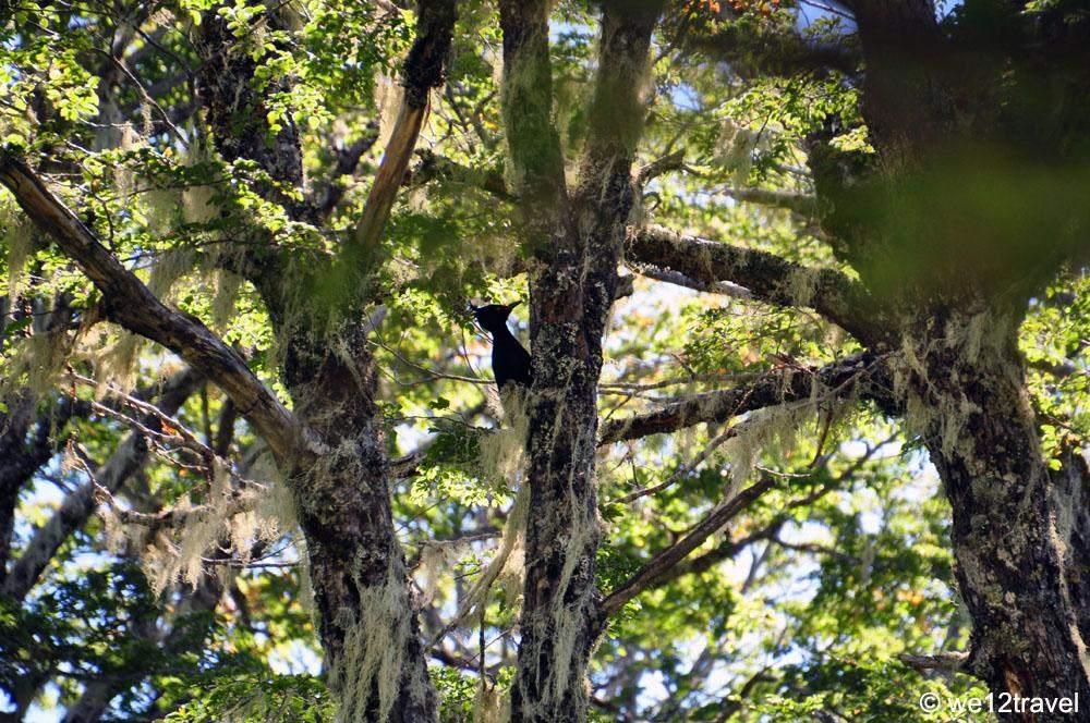 woodpecker-1