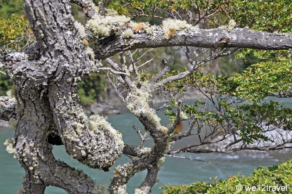 Valdivian-forest