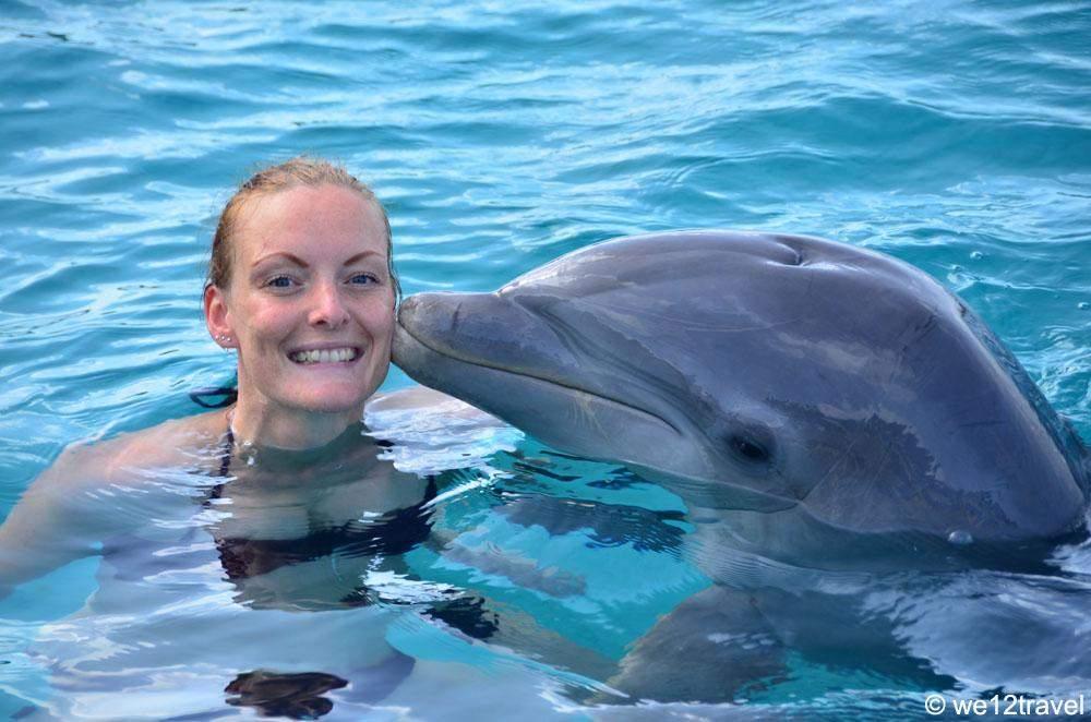 dolphin-swim-1