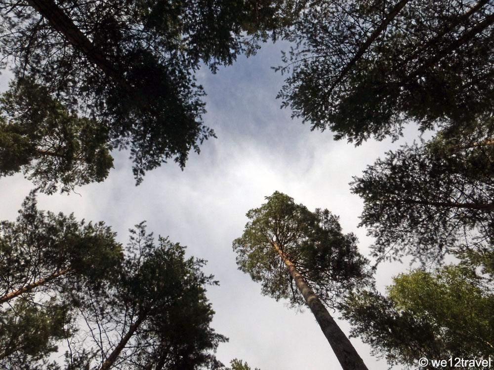 punkaharju-trees