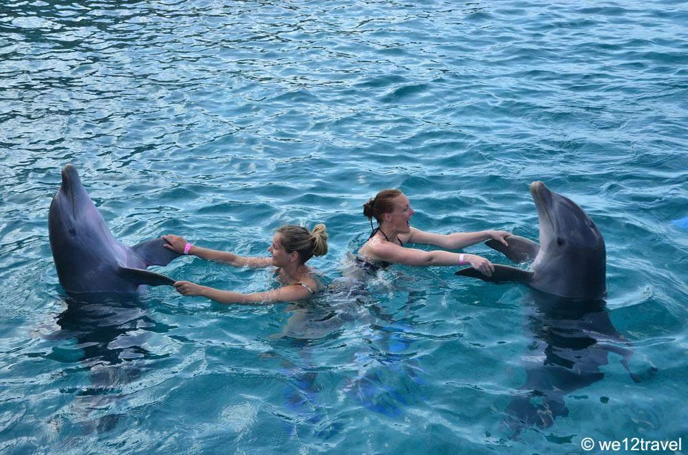 zwemmen-met-dolfijnen