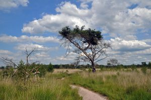 20 Parken: een dagje Kalmthoutse Heide