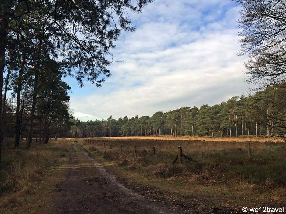 heathland-