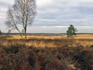 Walking Wednesday: short wood walk