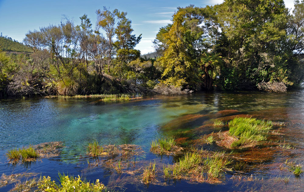 pupu springs best hikes in new zealand