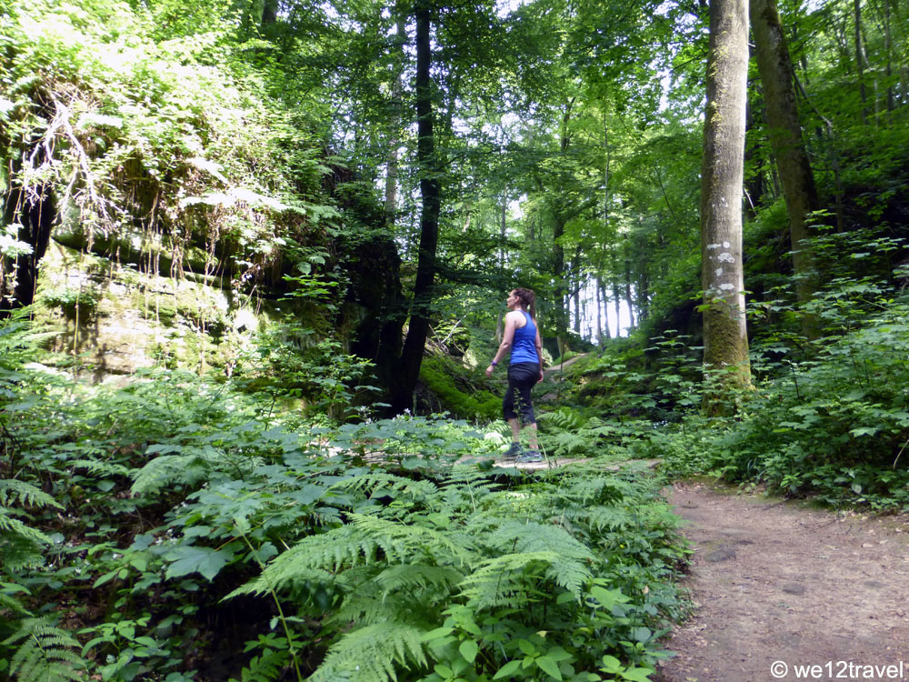 hiking-the-mullerthal-trail-anto-in-the-woods
