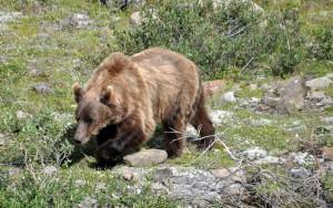 Solo wandelen als vrouw tussen de beren van Alaska