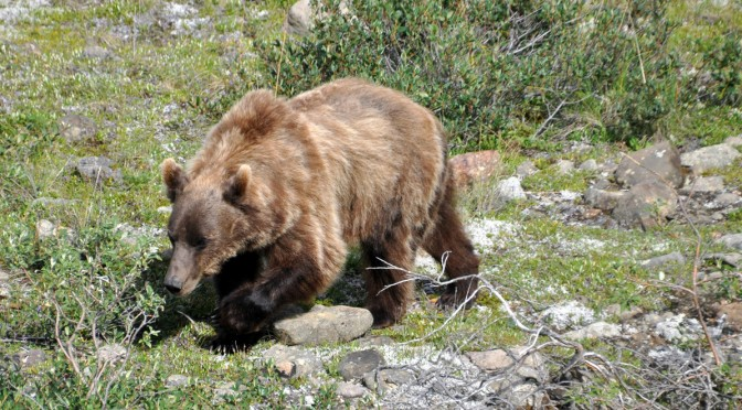 Solo-hiking in bear country Alaska - we12travel com