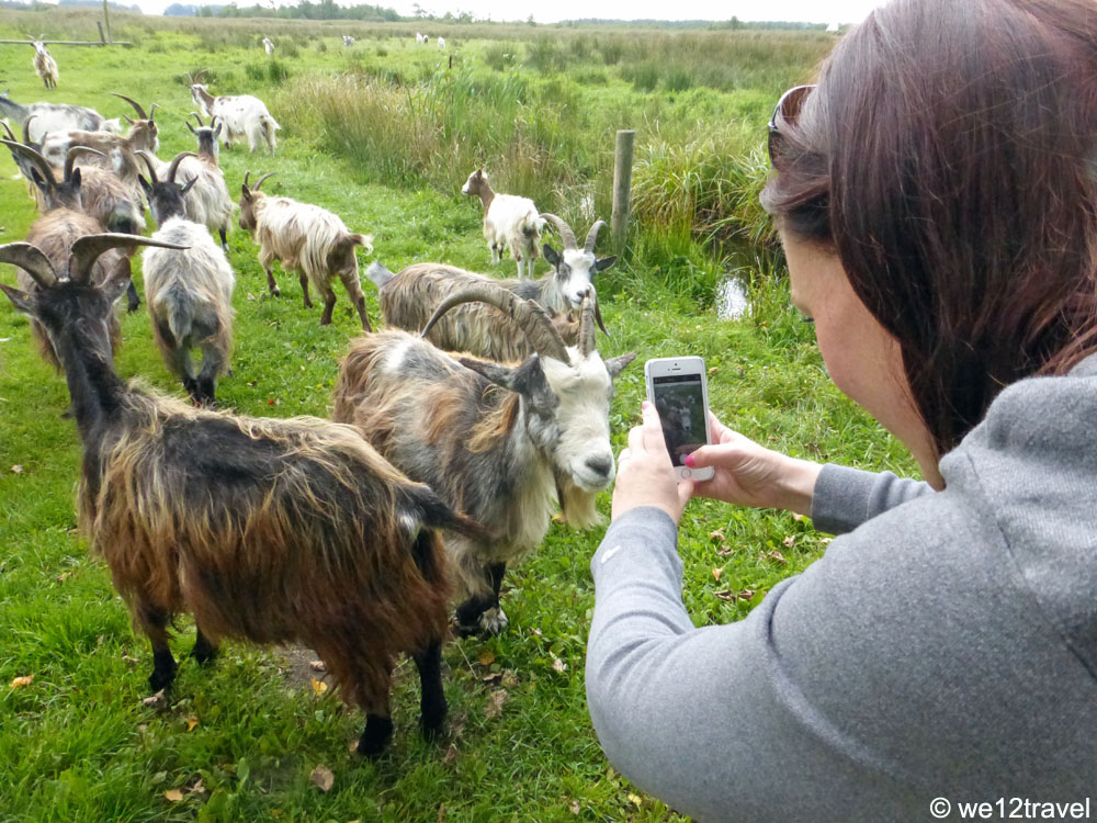 anto-picturing-goats