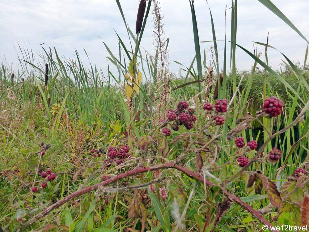 de-alde-feanen-berries