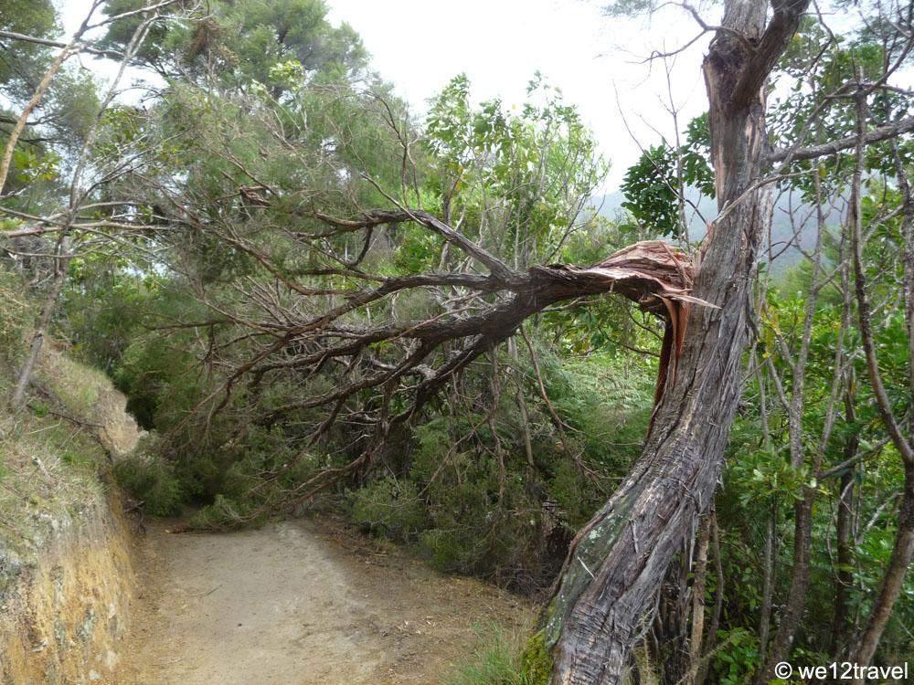 fallen-tree-queen-charlotte-track