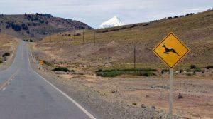 Roadtrip Patagonië: Ruta de los Siete Lagos en Lanín National Park