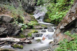 Cook Inlet Foto Safari met Alaska Photo Treks