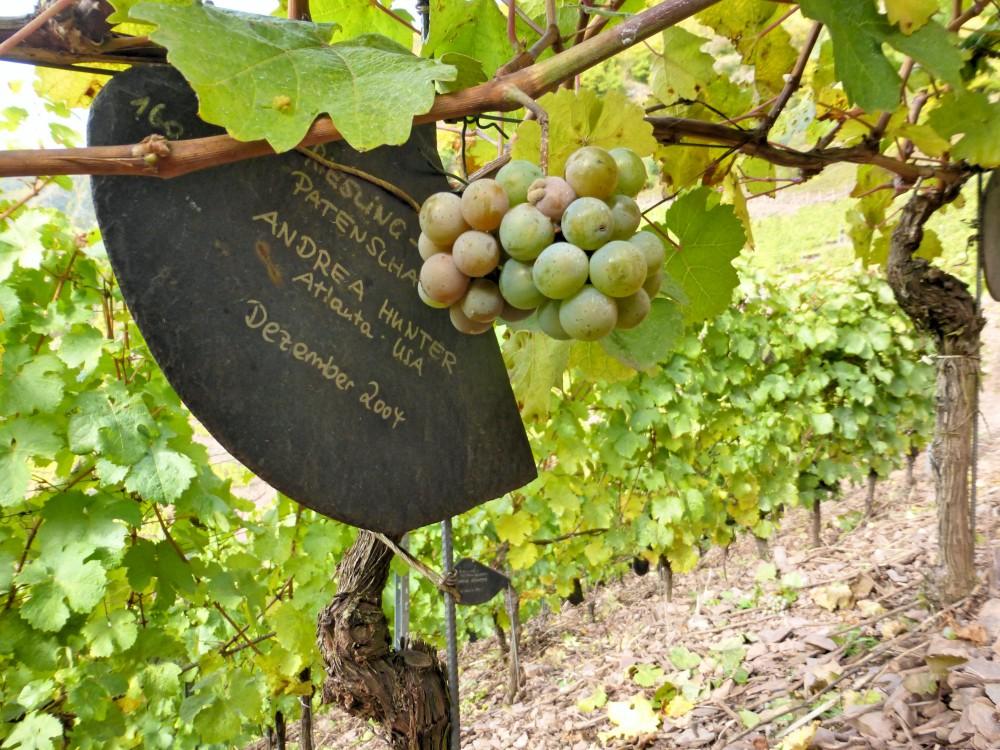 calmont winery ediger eller mosel germany