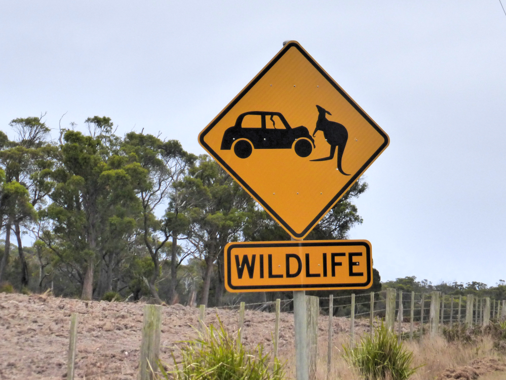 tasmania roadtrip