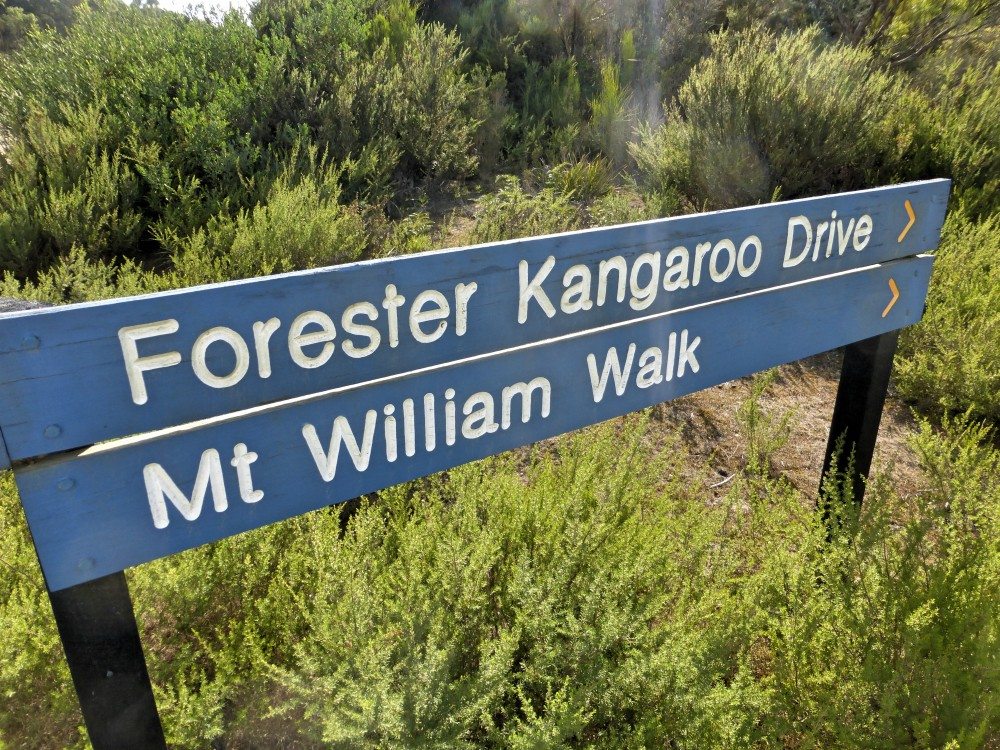 kangaroo-drive-mt-william