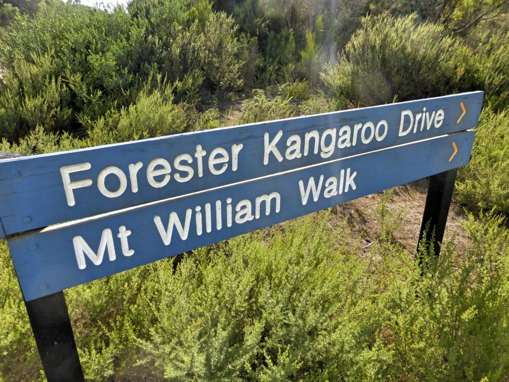 kangaroo-drive-mt-william