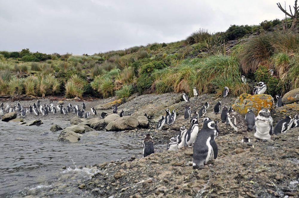 penguins patagonia