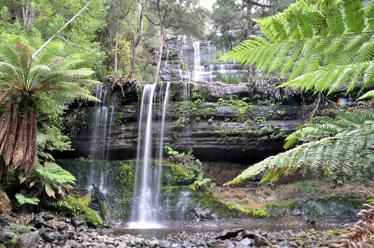 best hikes in tasmania russell falls mount field national park