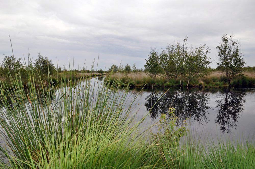 Geest Moor Moor Museum Internationaal Natuurpark Veenland