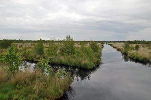 Verrassend Duitsland: Internationaal Natuurpark Veenland