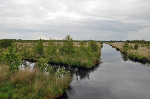 Dutch-German Naturpark Moor Veenland