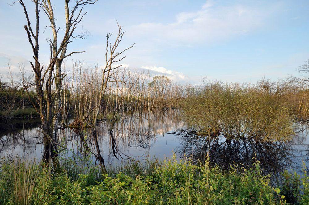 German-Dutch Naturpark Moor Veenland