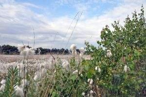 Hiking and biking in Naturpark Moor Veenland
