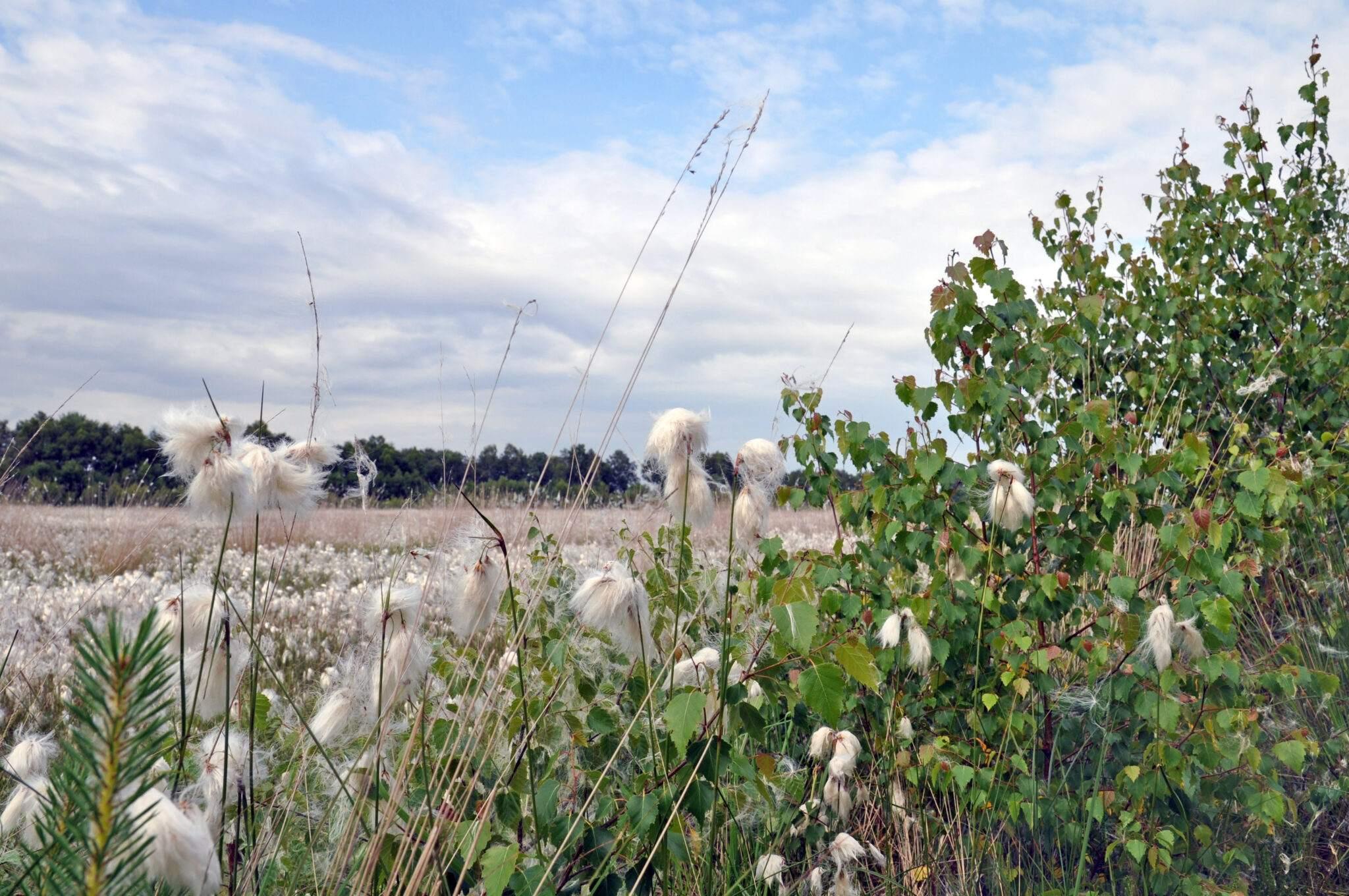 Naturpark Moor Veenland