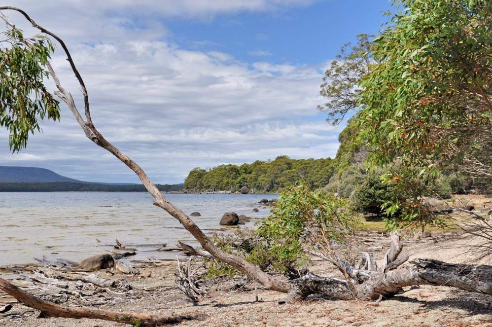 snakes in tasmania