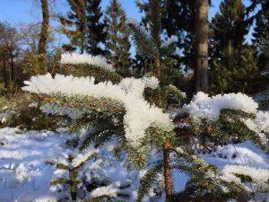 Winterwandelen: de beste wandelgebieden in de winter