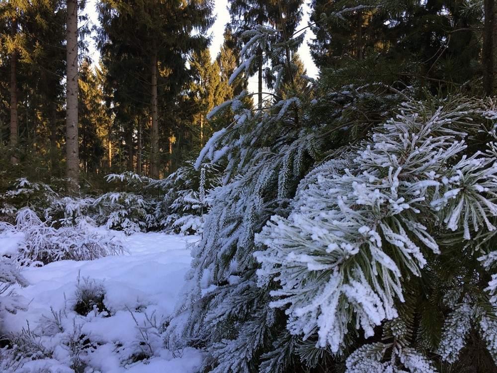 wandelen in salland winter