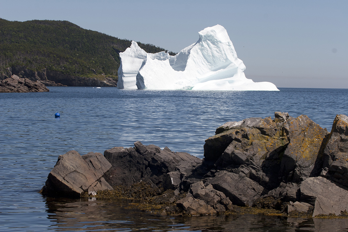ijsbergen in newfoundland
