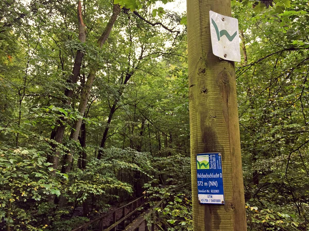 wandelen op de westerwald steig