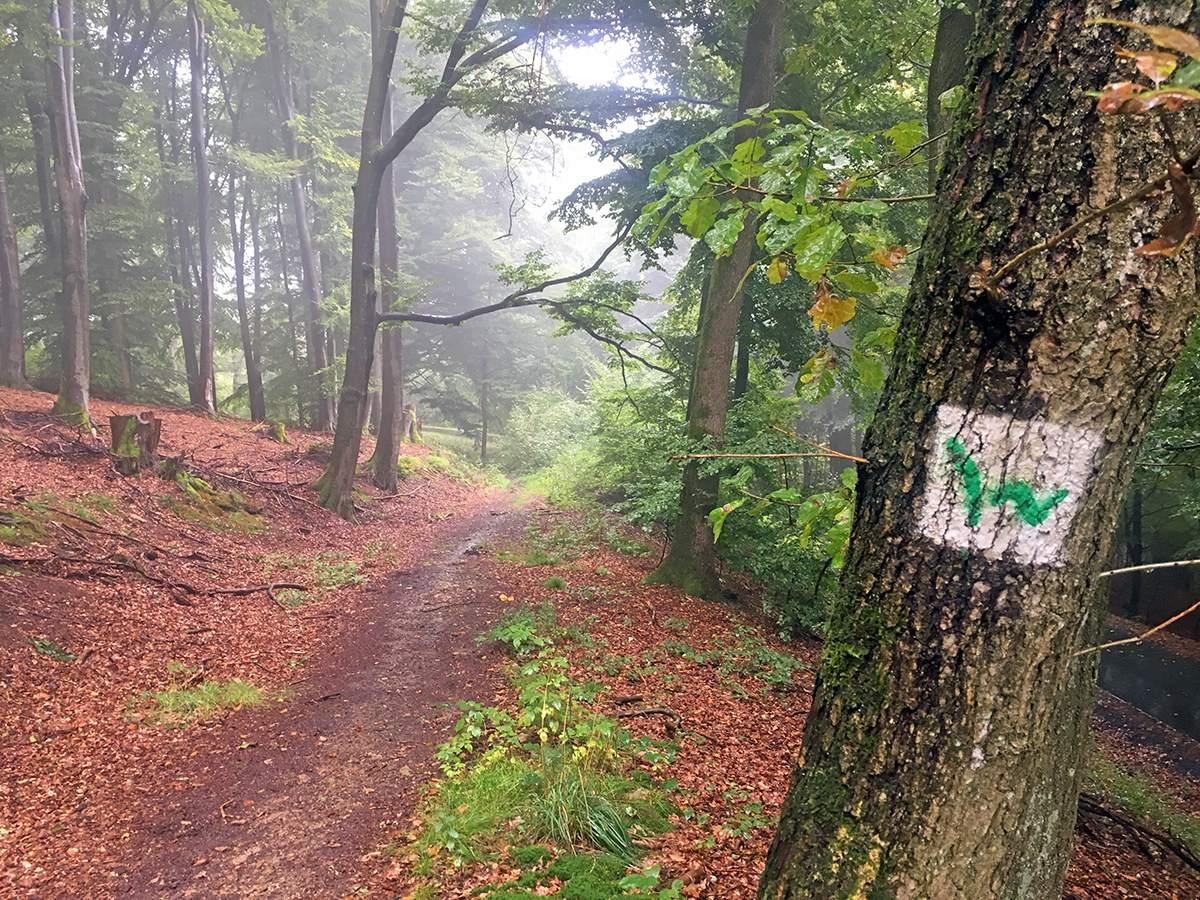westerwaldsteig markering