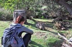 Wandelen en kamperen tussen de wombats op Maria Island
