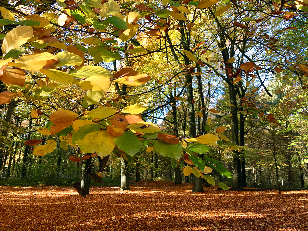 herfstwandeling in veluwezoom nationaal park