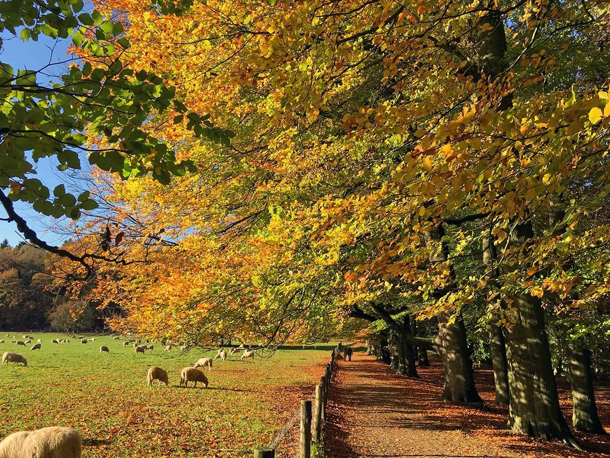 herfstwandeling in veluwezoom nationaal park