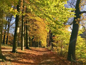 Herfstwandeling in Veluwezoom NP: home sweet home!
