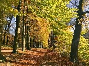 Herfstwandeling in Veluwezoom NP: home sweet home!