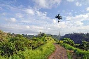 Must-do in Ubud: de Campuhan Ridge