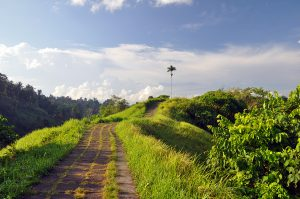 hiking the campuhan ridge walk in ubud bali