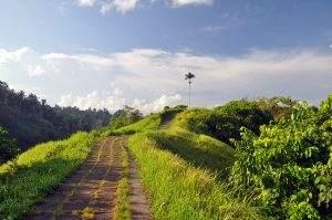 Hiking the Campuhan Ridge Walk in Ubud, Bali