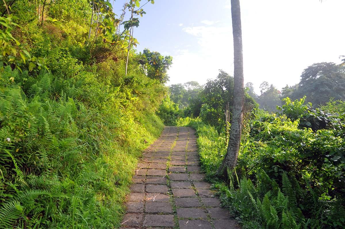 hiking the campuhan ridge walk in ubud bali