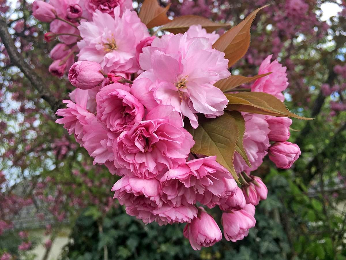 bloesemtocht buren beste wandelgebieden voor dit voorjaar