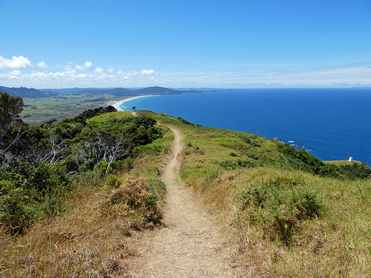 the best whangarei walks bream head te whara track