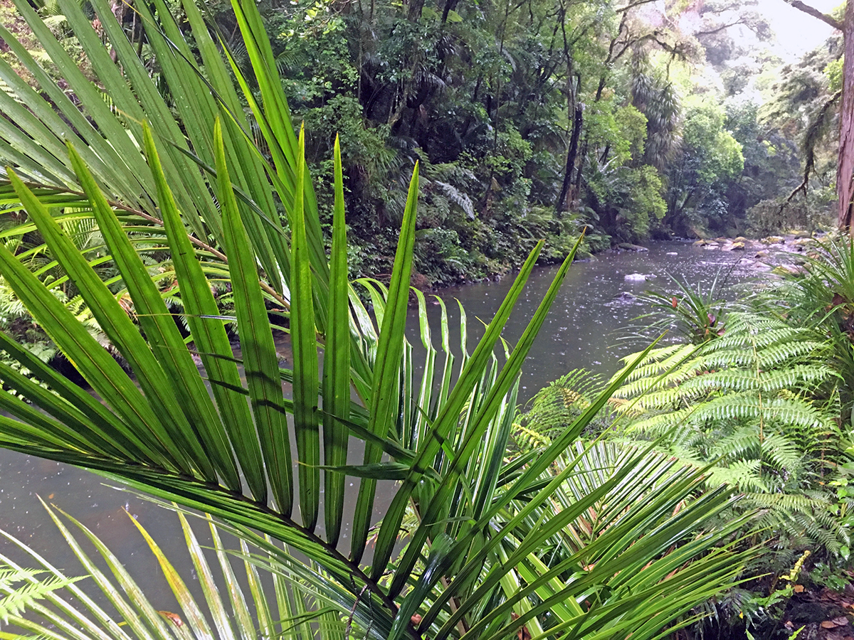 the best whangarei walks whangarei falls